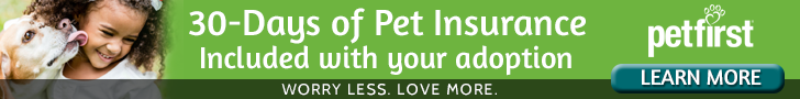 Adopted Pet Insurance